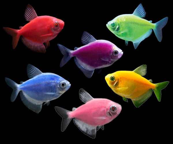 Glofish future now mini mart for Tetra acquario