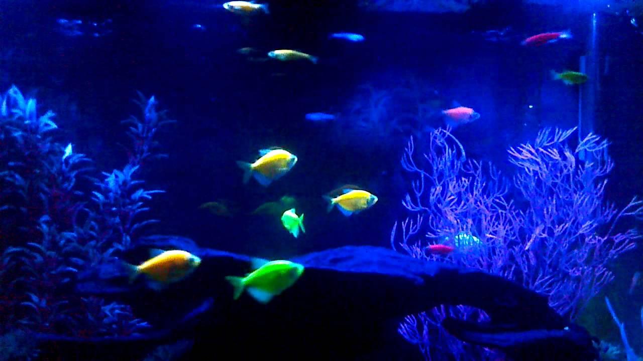 Glofish Future Now Mini Mart